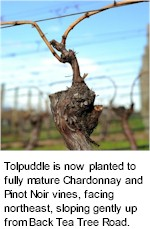 About Tolpuddle Wines